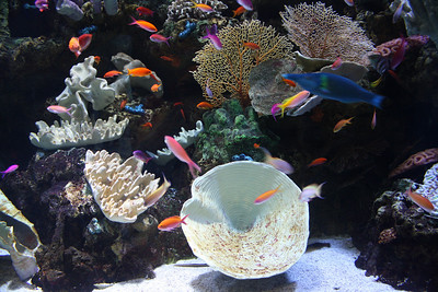 Coral and Colorful Fishes