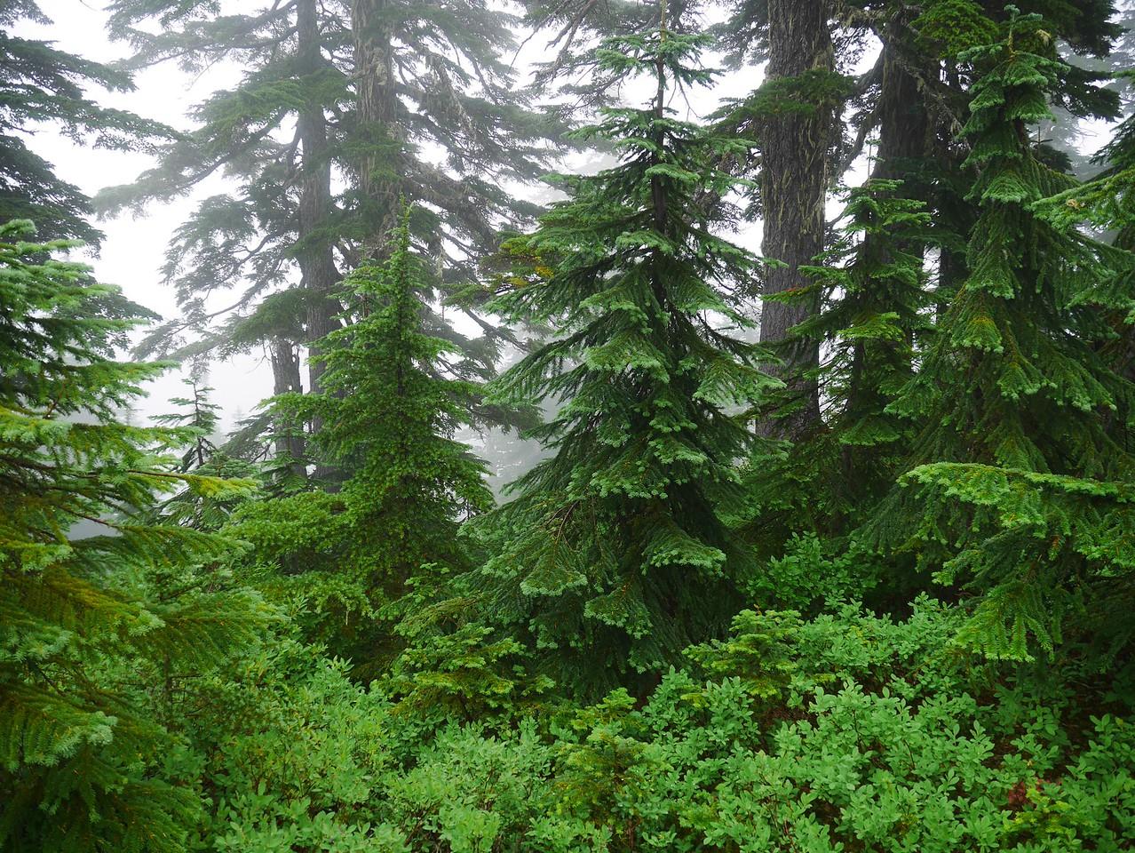 Mt Baker area- Lake Ann Hike