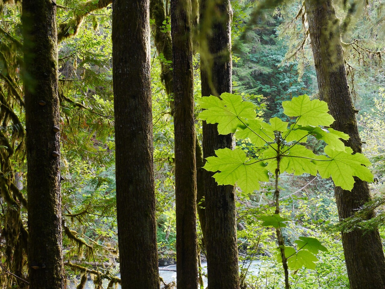 Mt Baker area- Horseshoe Bend Hike