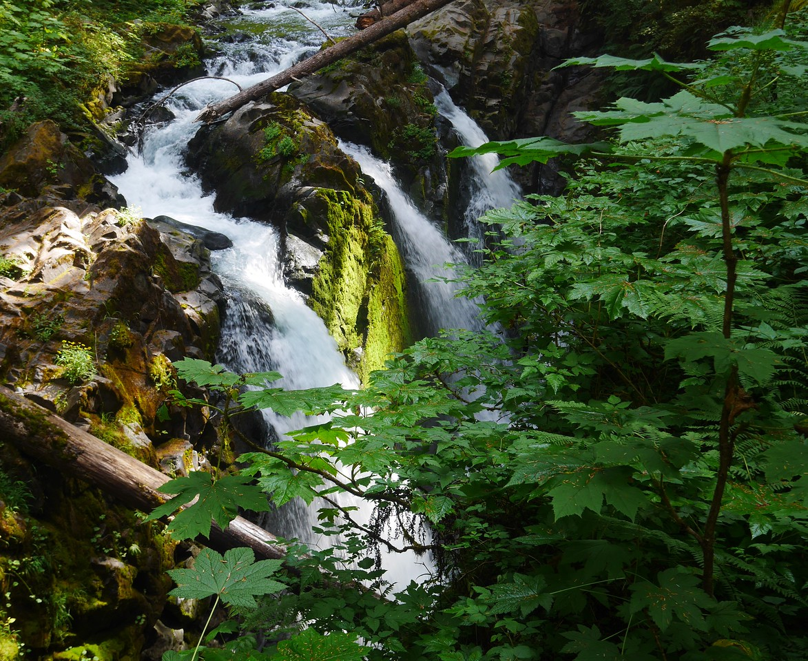 Olympic NP- Sol Duc Waterfall Hike