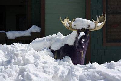 Decorated Moose Statue Covered in Snow