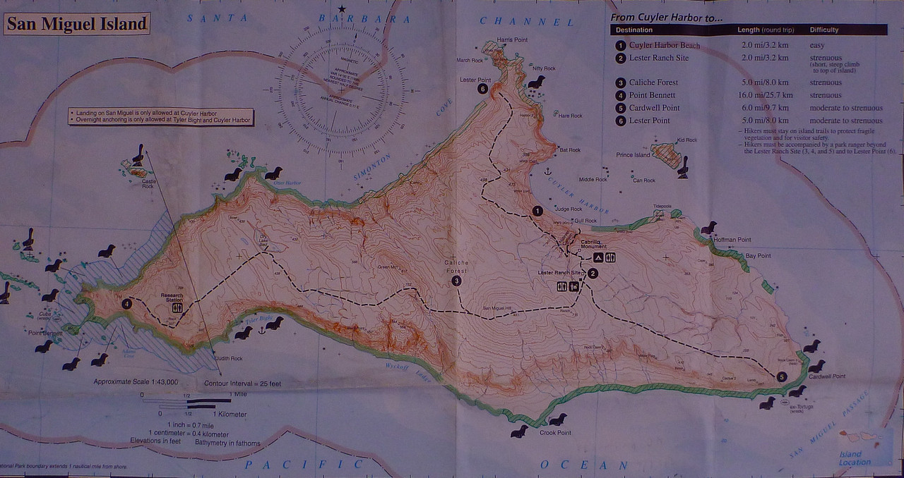 This map of San Miguel Island shows Cuyler Harbor on the NE side. It also shows the 3 trails that we hike on the island, all with a ranger. Point Bennett, the major haul out area for the pinnipeds, is on the far west.