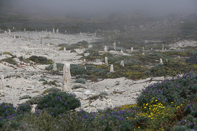 On the way, we visit the Caliche forest (sand castings of an ancient forest)