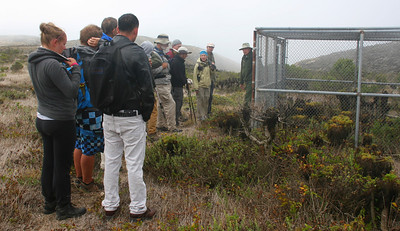 The following day, Ranger George shows us some of the pens that were used several years ago for the captive breeding of the island fox. They ceased doing this in 2007.