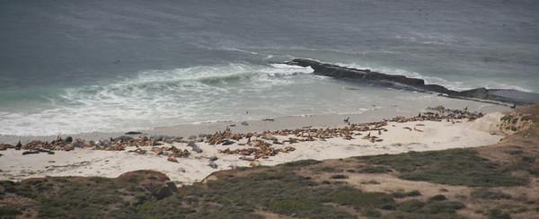 The South coast also has many sea lions.