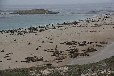 These are all sea lions and fur seals. Elephant seals also haul out here but were not visible when we were there.