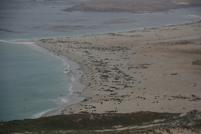The first view of Point Bennett is unforgettable. I have never seen this many mammals at one place outside of Africa.