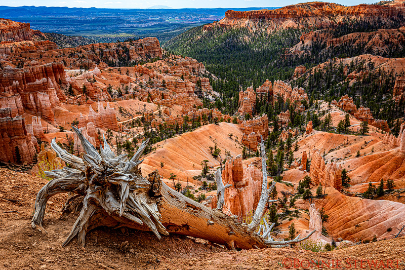 View of Bryce Canyon and a fallen tree
