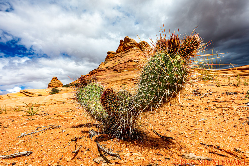 Cactus framing the sandstone formation