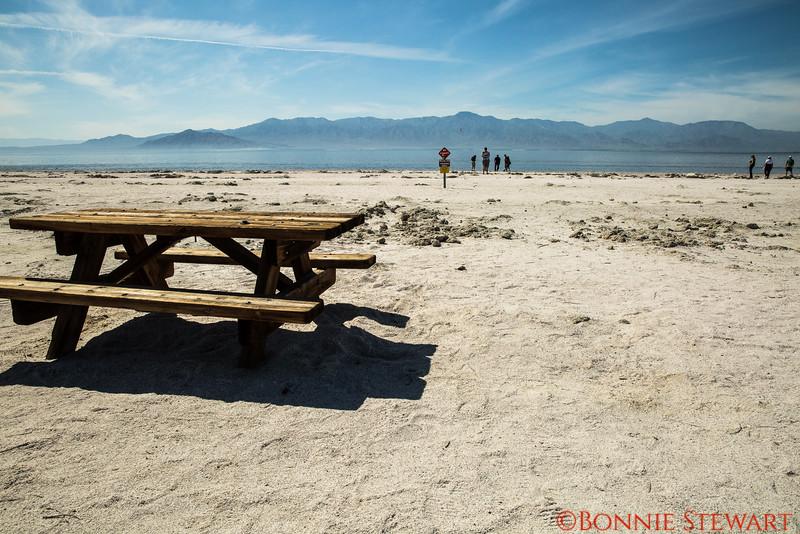 "Salton Sea ""beach"""