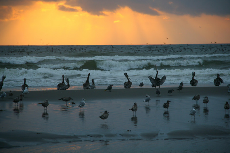 Washington Coast birds