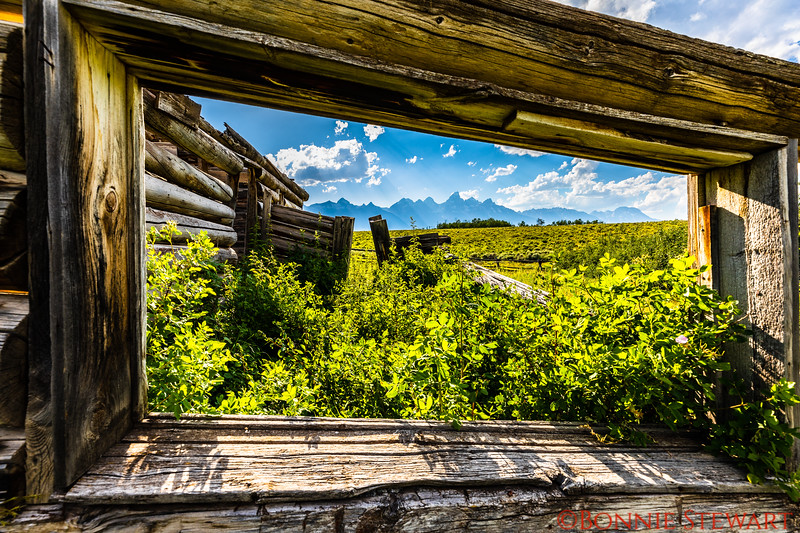 "View of the Grand Teton Mountains through a ""window"" of the Shane Cabin"
