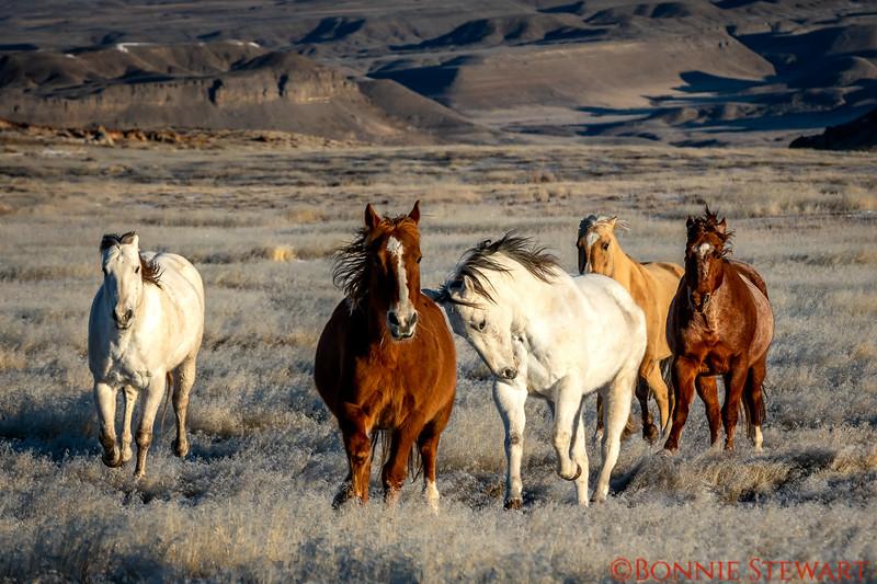 Wild horses running!