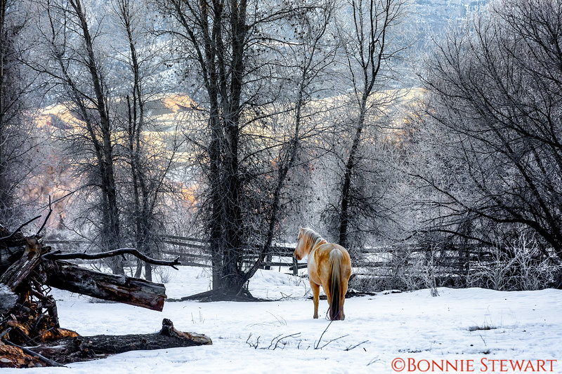 Peaceful horse surrounded by  ice-covered tree branches - ethereal scene
