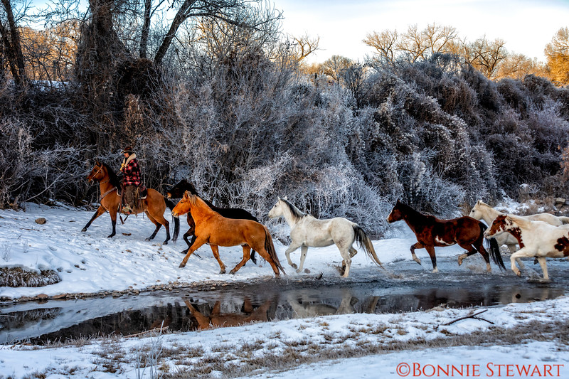 Wrangler Tom leading the horses through the water at sunrise