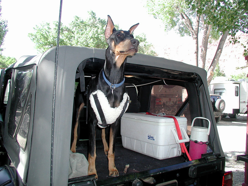Puppy Zina is almost ready for her second Moab trail ride