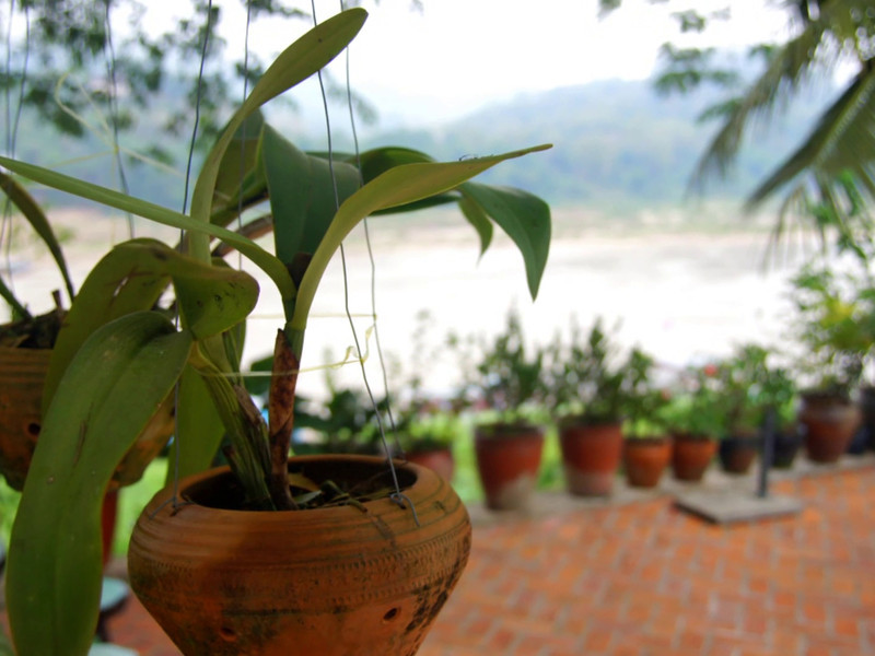 """<a href=""""http://nomadicsamuel.com"""">http://nomadicsamuel.com</a> : Luang Prabang is one of my favourite cities in all of Asia. It's a quiet retreat from nearby hectic metropolises. This 30 part slideshow series showcases Luang Prabang, Laos: monks, temples, hills, scenery, people, markets  Colour is the first of Luang Prabang's virtues to greet travellers. Pearly frangipanis with their heady perfume, banks of overgrown trees peppered with scarlet flowers, the burnt sienna robes of hundreds of monks and their novices, and resplendent gold and claret wats. The scent of fresh coffee, river activity, produce markets and spicy food soon follows. And then the broader aesthetics begin to unfold. Encircled by mountains, and set 700m above sea level at the confluence of the Nam Khan (Khan River) and the Mekong River, Luang Prabang is now Laos' foremost tourist showpiece. The brew of gleaming temple roofs, crumbling French provincial architecture and multiethnic inhabitants captivates even the most jaded travellers, and the quiet benevolence of the city's residents lulls them into a somnambulant bliss.  Sealed highways linking Luang Prabang with Thailand and China have turned the city into an important relay point for commerce between the three countries. City governors have wisely provided a road bypass system that gives the city centre a wide berth. Thus the sense of calm antiquity that first brought visitors to the city when Laos opened to tourism in 1989 has been well preserved. Moreover, the city is Unesco Heritage listed, which means a blessed ban on buses and trucks. Most road activity consists of bicycles or motorcycles, but an even score simply go by foot. Although the city teems with travellers, it is not a party destination, and the 11.30pm curfew silences the city by midnight and maintains its traditional disposition: <a href=""""http://www.lonelyplanet.com/laos/northern-laos/luang-prabang"""">http://www.lonelyplanet.com/laos/northern-laos/luang-prabang</a>  Proudly pres"""
