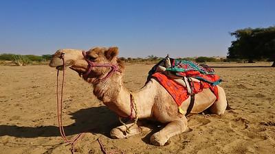 JaisalmerDesert