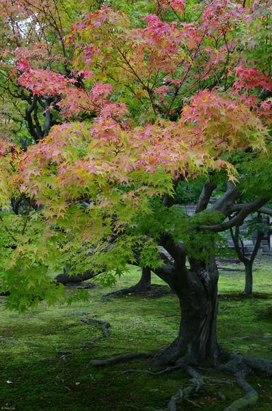 NIJOJO, KYOTO. 二条城,京都