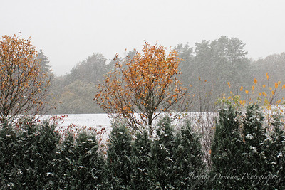 Fall Colors & First Snow-4