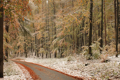 Fall Colors & First Snow-9