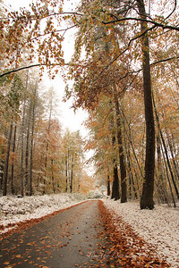 Fall Colors & First Snow-15