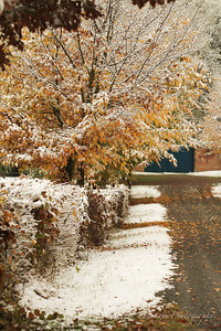 Fall Colors & First Snow-19