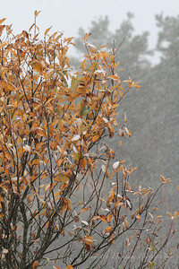 Fall Colors & First Snow-7