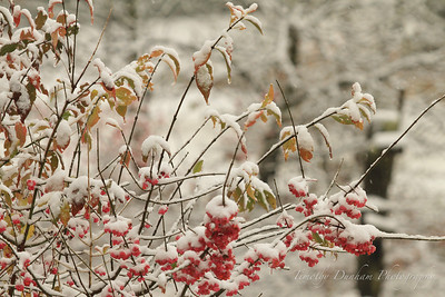 Fall Colors & First Snow-22