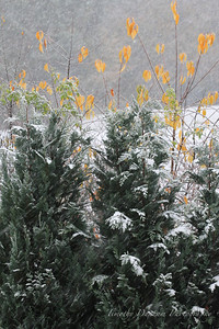 Fall Colors & First Snow-6