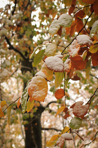 Fall Colors & First Snow-13