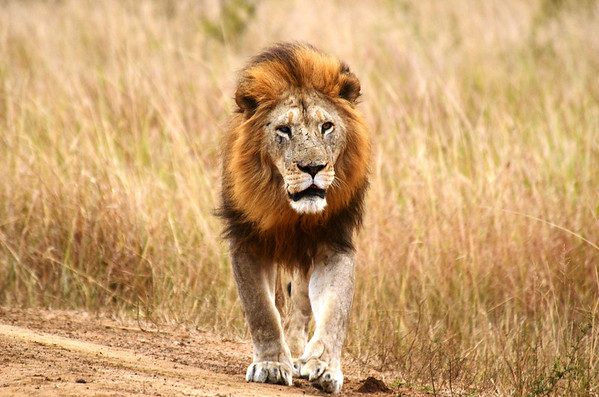 2012 South Africa (2)