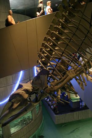National Aquarium