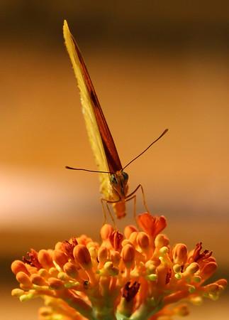 Natural History & Butterflies