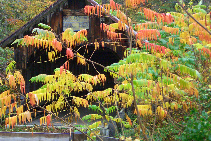 Fall Colors at Covered Bridge