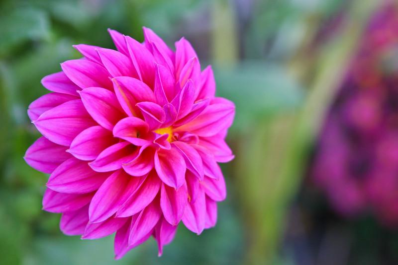 Brilliant Flower