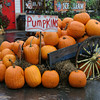 Pumpkin Harvest in New Hampshire