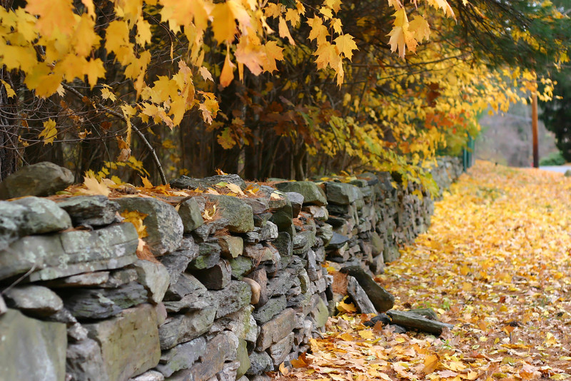 Fall Foliage in Connecticut