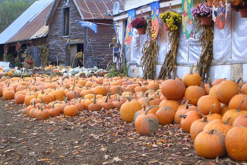 Pumpkin Harvest in Vermont