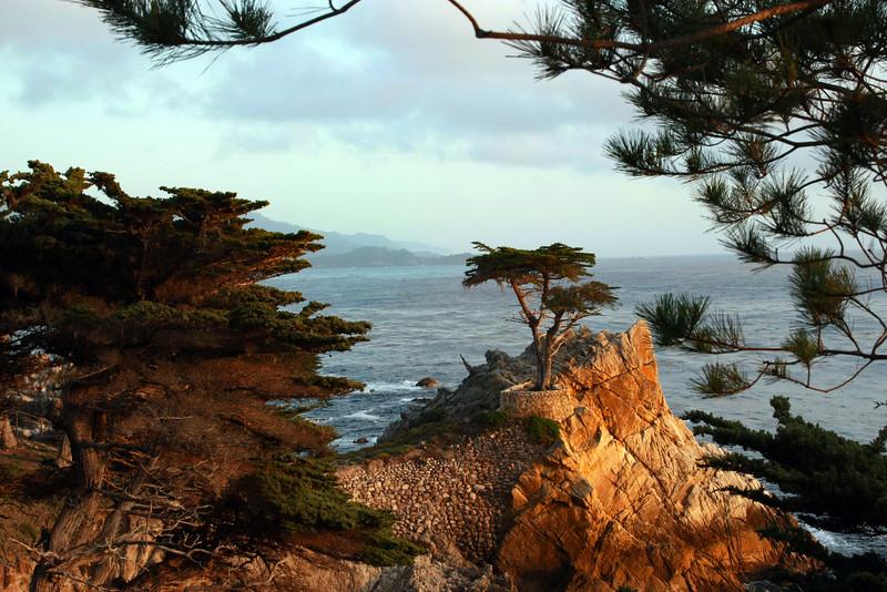 Pebble Beach, Monterey Peninsula, Cyprus Tree,
