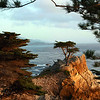 Pebble Beach, Monterey Peninsula, Cyprus Tree,