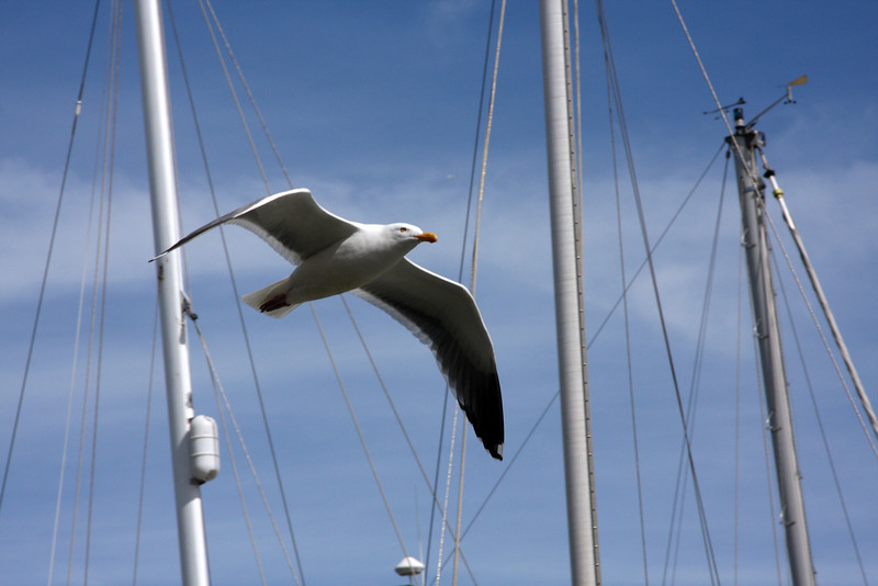 Seagull between Masts