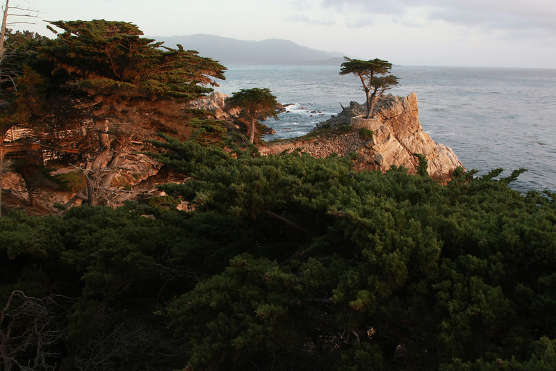 Lone Cyprus Tree near Pebble Beach