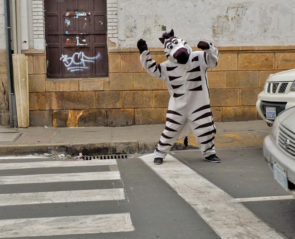 66  Zebra at work, Sucre
