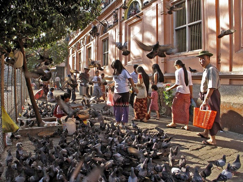 Pigeon Street, Indian Quarter, Yangon - That's my own name for this street, just outside of Yangon's Hindu Temple. Pigeons by the thousands feed there from bags of bird seed sold by vendors.