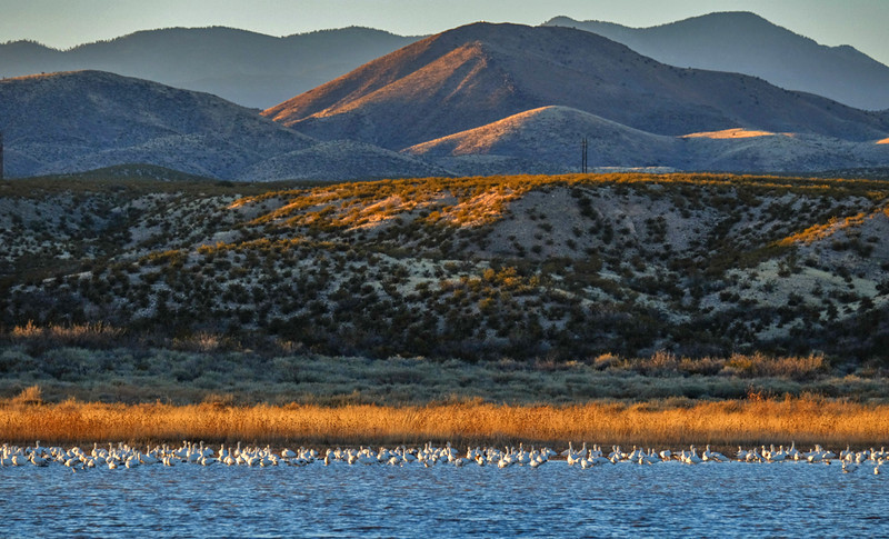 14  Layers, Bosque del Apache National Wildlife Refuge, New Mexico
