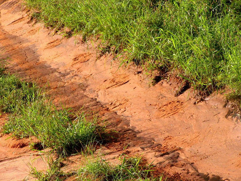 Big feet on the trail - An elephant was walking just ahead of us in Kenya's Tsavo National park. We never saw it, but we couldn't miss its foot prints.