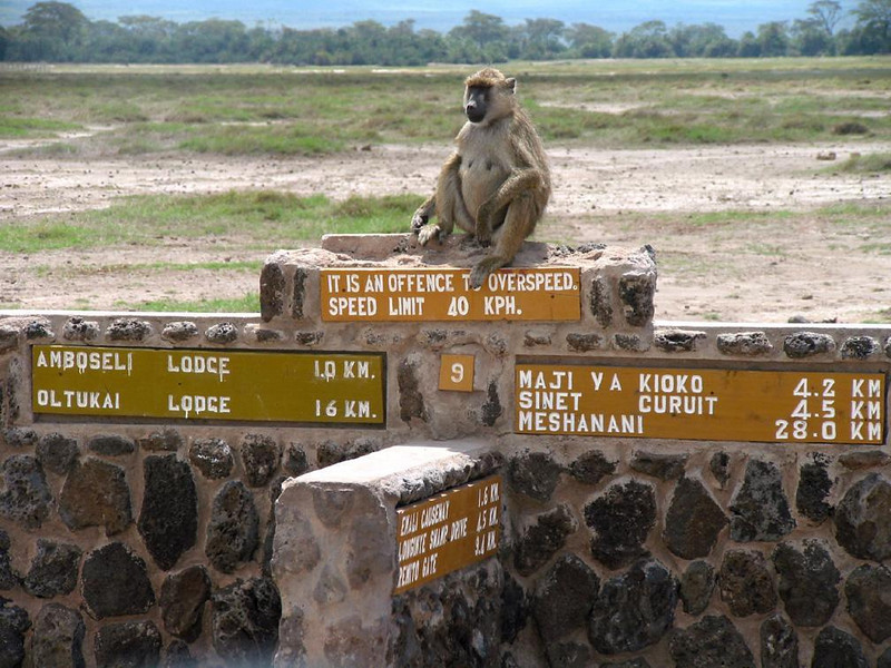 Welcome to Amboseli - At the entrance to Kenya's Amboseli National Park, a baboon reminds us to watch our speed.