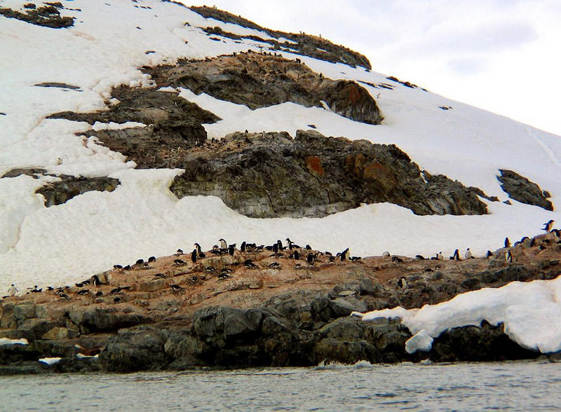 Penguin High Rise, Cuverville Island - Cuverville Island is noted for hosting the largest known colony of Gentoo penguins in Antarctica -- about 5,000 pairs. Although we could not land on Cuverville, the Zodiacs took us very close to the island, so close that could see penguins nesting in rookeries stacked in layers on this hillside.