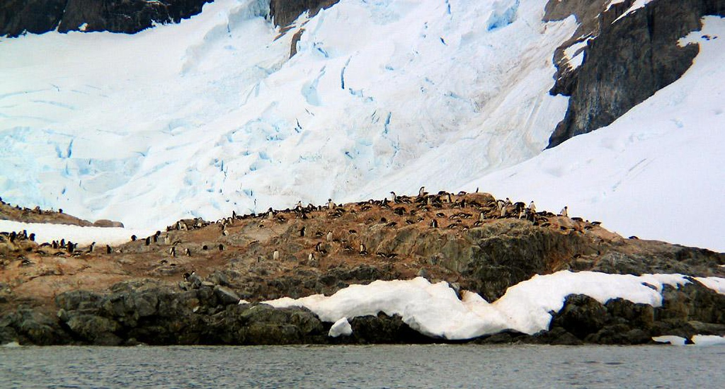 Under The Glacier, Cuverville Island - Hundreds of Gentoo penguins nest in a rookery at the base of one of Cuverville Island's many glaciers.